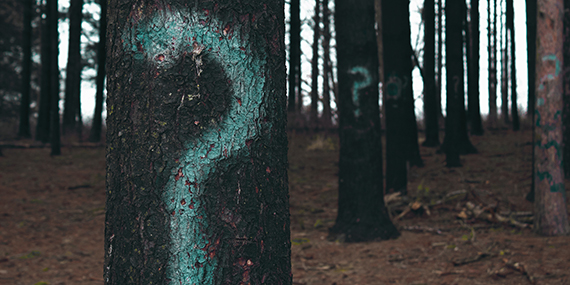 Trees in forest with spray painted question marks